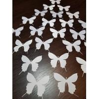 Бабочки (2)